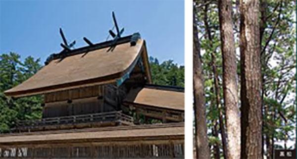 島根県「神々の国しまねの木」ダミー